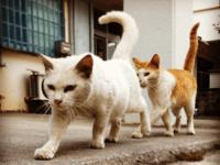 沖縄のネコ写真全応募作品 Instagram編その1