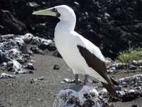 【深掘り】噴火で拡大した小笠原諸島・西之島 海鳥、植物どう増える? ゼロから形成、観察の好機