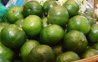 沖縄シークヮーサーに脂肪燃焼・肝機能改善の効果