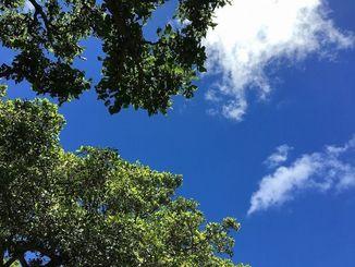 好天が続き好調だった沖縄観光
