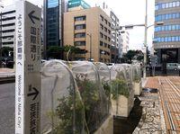 台風14号(ヤギ):沖縄本島に最接近へ 宮古島はあす未明
