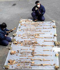 沖縄戦で亡くなった人とみられる8体の遺骨を並べ、骨に付いた土を落とす浜田哲二さんと律子さん夫妻=3日、糸満市内