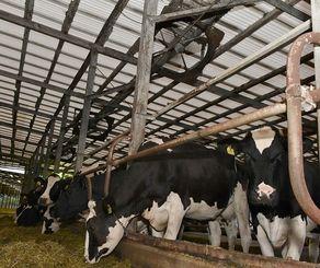 乳牛の体調管理のため、大型扇風機やミストで暑さ対策をする牧場