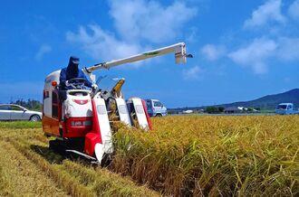 青空の下、今シーズンの稲刈りが行われた=15日、伊是名村勢理客区