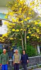 鮮やかな黄色い花を咲かせたキバナイペーを楽しむ(写真左から)東恒雄さん、繁子さん、直子さん家族=恩納村名嘉真の東さん宅