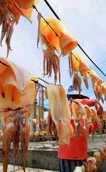 天日干しされ、風に揺れるトビイカ=11日、南城市の奥武漁港