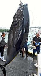 水揚げされる沖縄近海で捕れたクロマグロ=4月20日、那覇市港町・泊漁港