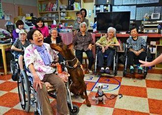 ドーベルマンのダン君(中央)になめられる上原清子さん(手前左)=8日、浦添市経塚のデイサービスかじまやー