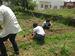 農作業を通して不健康な生活状況の改善を図る。また収穫等の作業で利用者通しのコミュニケーションも生まれる=うるま市・コミュッと