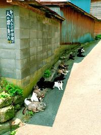 ねこに会いに行こう 岩合光昭写真展(10)
