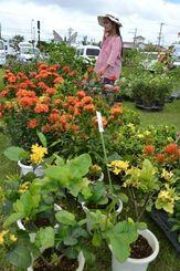 お気に入りの草花を探し求める来場者=5日、市登川の市農民研修センター