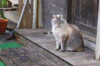 那覇市与儀の美人猫。