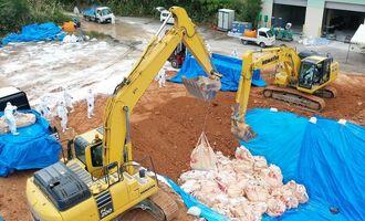 殺処分した豚コレラ感染豚を埋却(資料写真)