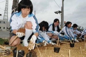 ハイビスカスの苗を植える兵庫県立小野高校の生徒=5日、宮古島市・池間島