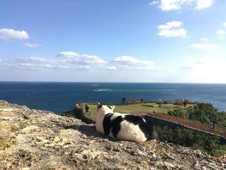 「岬の守り猫」2017年1月22日 南部へドライブに行った際、知念岬にて。