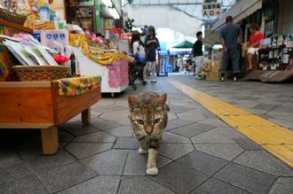 「パトロール!」2年ぐらい前に沖縄旅行中に牧志公設市場をパトロール中の猫さんに出会いました。