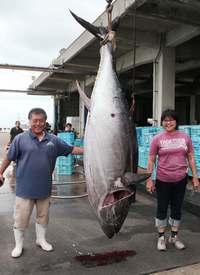 262キロ本マグロも 沖縄・八重山漁協 今シーズン初水揚げ