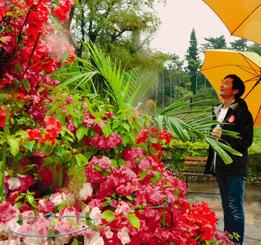 展示されているブーゲンビレアを鑑賞する来場者=3日、沖縄市・東南植物楽園
