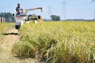 稲刈りをする農家