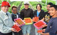 「申し訳なく、もったいなく」 イチゴ人気に生産追いつかず…沖縄・宜野座村、増産へ工夫