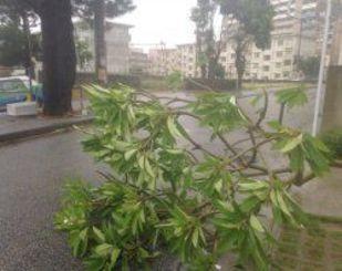 植栽の木が倒れ、道路をふさいでいた=10日午前8時、浦添市(平良秀明撮影)