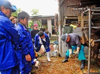 削蹄師の技術を見てひづめの削り方を学ぶ農業大学校生ら=23日、うるま市昆布