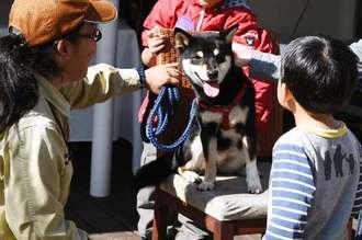 来園者と触れ合う東南植物楽園の看板犬「マチコ」=1日、沖縄市知花・東南植物楽園(同園提供)