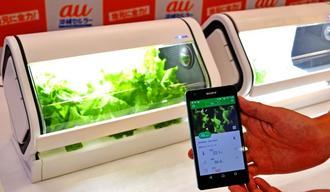 IoT技術と植物工場のノウハウを合わせた家庭用水耕栽培キット「やさい物語」=日、那覇市・沖縄セルラー電話