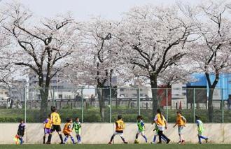 3月、満開の桜の下でサッカーをする子どもたち=東京都内