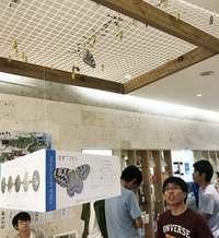 日本最大のチョウ、オオゴマダラを観察できる製塩会社 沖縄・宮城島