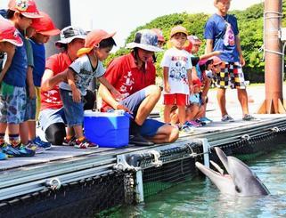 保育園児からプレゼントの魚をもらうバンドウイルカの「ルナ」=もとぶ元気村