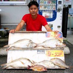 渡嘉敷島で53.7センチ、2.06キロのタマンなどを釣った新垣克さん=8月25日