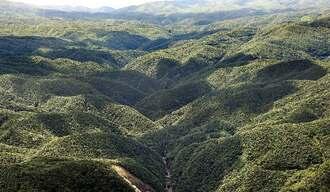 住用川流域の照葉樹林が広がり、原始的な森の風景が続く世界自然登録地の奄美大島(朝日新聞社提供)
