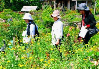 手入れされた庭や草木を楽しむオープンガーデンが、南城市で始まった=5日、市佐敷津波古