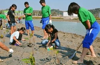 マングローブの苗を植える小学生や高校生。生き物を見つけて歓声が上がり、作業が中断することも=18日、うるま市州崎