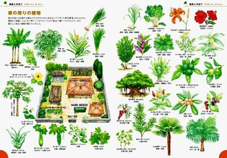 病気の予防やけがの手当てに使われてきた植物を紹介するページ(読谷村史編集室提供)