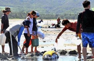 干潮で動けなくなった小型クジラに海水を掛けるなど心配そうに見守る市民