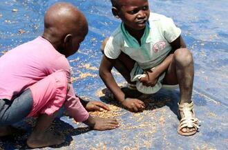 食料不足に陥ったジンバブエで、配給の際にこぼれた穀物を拾い集める子どもたち。地球温暖化は食料不足を深刻化させる恐れが強い=2015年10月(ロイター=共同)