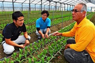 トルコギキョウを栽培している(右から)農家の福元明さん、JAおきなわの梶原優哉さん、玉村研治さん=糸満市米須