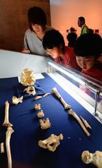 歴史を塗り替える旧石器時代の貴重な人骨を熱心に見学する親子=21日、西原町・県立埋蔵文化センター