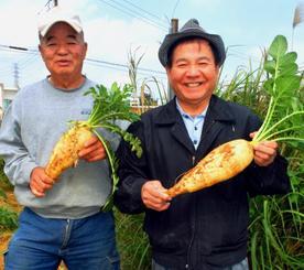 天願で栽培した島ダイコンを手に取る菊農家の仲村朝吉さん(左)と照屋勇自治会長=うるま市天願