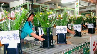 5日の清明祭入りに向けて一斉に競りにかけられる「シーミー花」=3月31日、浦添市伊奈武瀬の中央卸売市場
