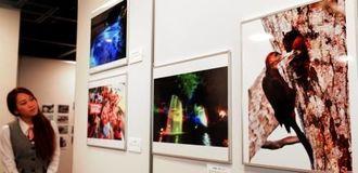 2014年のニュースを振り返る九州報道写真展=17日、那覇市久茂地・タイムスギャラリー
