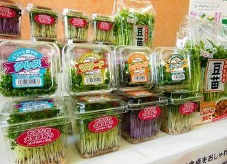 沖縄村上農園と沖縄物産企業連合が発売した4種類の発芽野菜「スプラウトシリーズ」と豆苗=22日、県庁