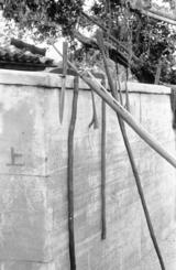 名護湾で行われていたヒートゥー漁のための道具。解体時に肉を引っかけて使う手かぎや、先のとがったいくつかの銛(もり)、鋭い短刀などが並ぶ。銛の先には返しが付き棒の先に備えられており、突き刺した後に離れないようロープが結ばれている。いつでも使用できる状態で準備がなされたものと思われる(写真は朝日新聞社提供)