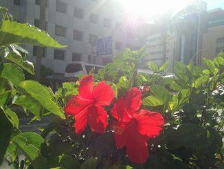(資料写真)沖縄