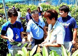 ビワの葉の色と、土壌の酸性度の関係性を営農指導員へ教える武田健技術顧問(手前左から2人目)=9月20日、うるま市石川山城