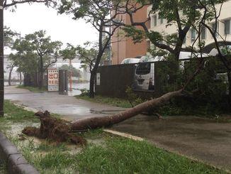 街路樹が倒れ、歩道をふさいでいた=29日午前9時20分、那覇市壺川の中央郵便局前