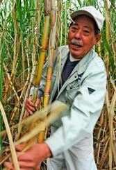 サトウキビの葉を取る仲村薫さん。タバイやマジンといった収穫作業に関するしまくとぅばがあるという=月日、南城市佐敷手登根