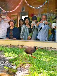 約5年間の「活動」を終えるキョンキョンを一目見ようと多くの人が訪れた=23日、国頭村・安田のヤンバルクイナ生態展示学習施設
